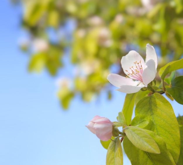 Lente cherry bloemen