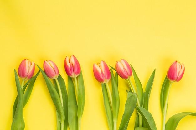 Lente concept. tulpen met gele achtergrond, ruimte voor tekst, april pasen-concept