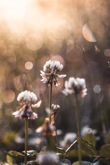 Lente en zomer zachte bloemen achtergrond