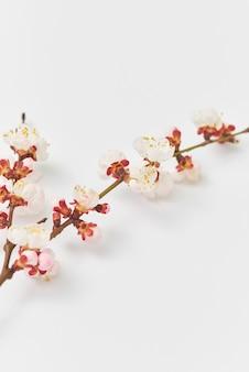 Lente felicitatie briefkaart van verse tak van natuurlijke bloeiende abrikozenboom