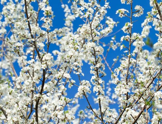 Lente grens met bloesem, close-up. abstracte bloemen lente. bloesems over wazig natuur