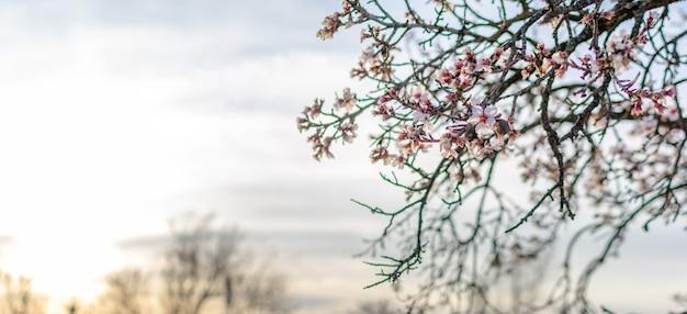 Lente grens of achtergrond kunst met roze bloesem