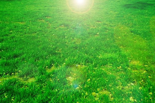 Lente groen gras in de zon
