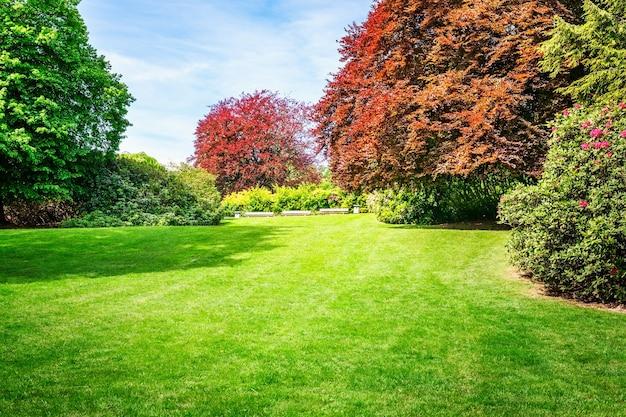 Lente groen park. stadspark met bloeiende rododendron, vers gazon en koperen beukenboom. lente landschap achtergrond