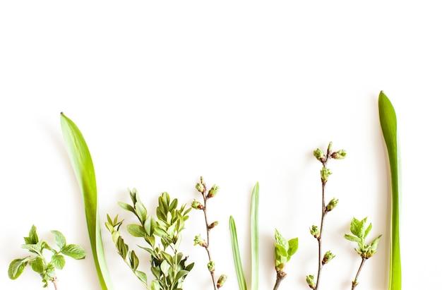 Lente groen planten op witte achtergrond. platliggend bos- en natuurconcept