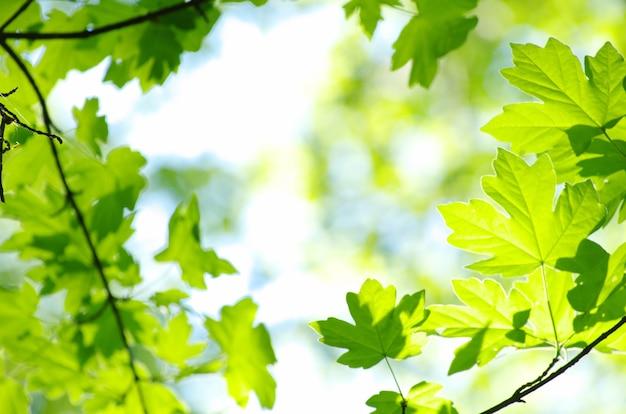Lente groene bladeren achtergrond in een zonnige dag
