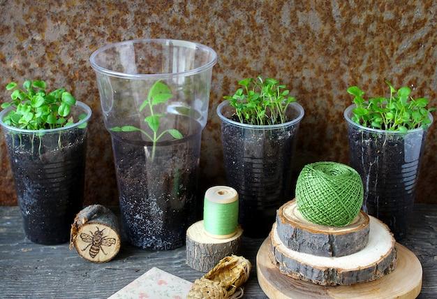 Lente groene zaailingen van altviool