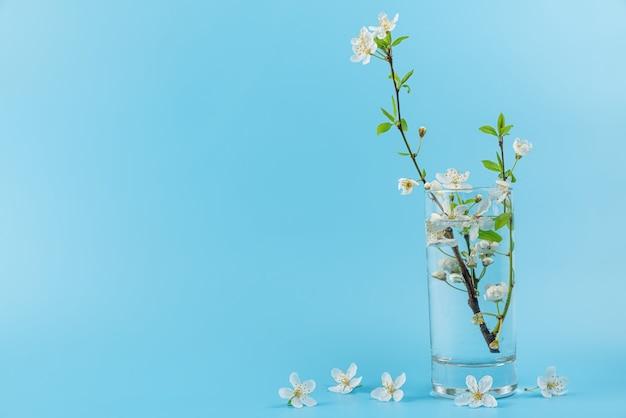 Lente kersen bloeiende bloemen in glas water op blauwe ondergrond