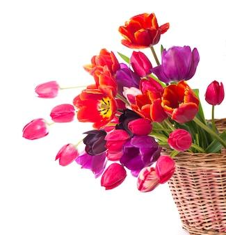 Lente kleur tulpen in een boeket met roze, rode mooie bloemen geïsoleerd op wit