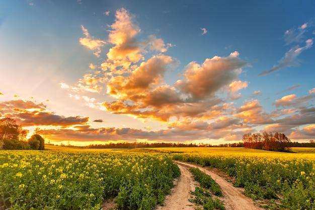 Lente kleurrijke wolk zonsondergang over koolzaad veld