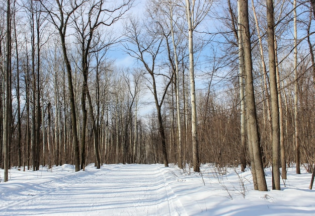 Lente landschap bos bij zonnig helder weer