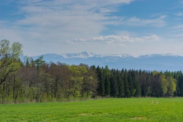 Lente landschap. gebied van ingezaaide haver, bos en bergen.