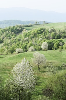 Lente landschap met bloeiende bomen op de groene heuvels van een bergdorp