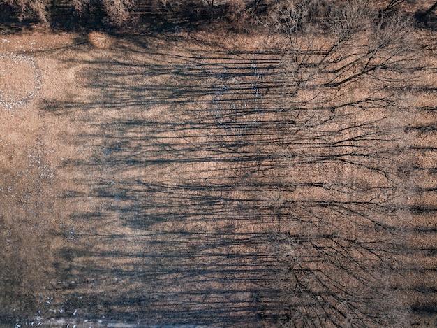 Lente landschap van bomen zonder bladeren met lange schaduwen op een grond. luchtfoto bovenaanzicht van drone. kopieer ruimte.