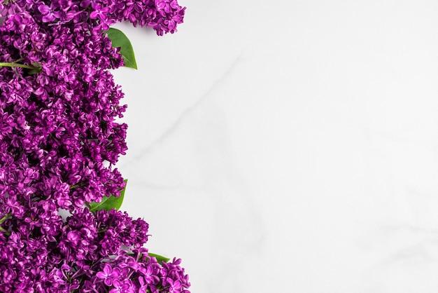 Lente lila bloeiende bloemen op witte ondergrond