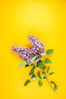 Lente lila tak op een helder geel oppervlak