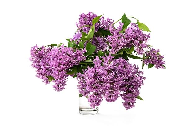 Lente lila takken geïsoleerd op een witte achtergrond.