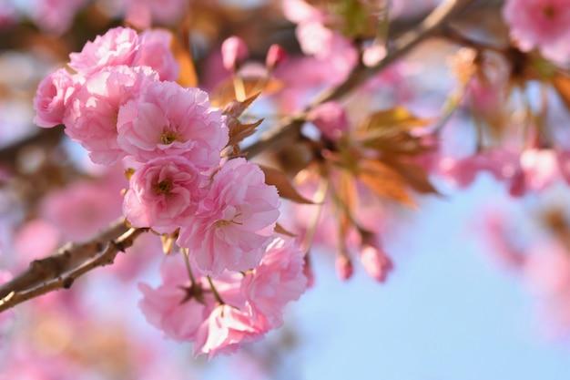 Lente. mooie bloemenveer abstracte achtergrond van aard. bloeiende takken van bomen voor sp