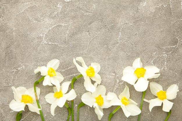 Lente narcissen op een grijze beton