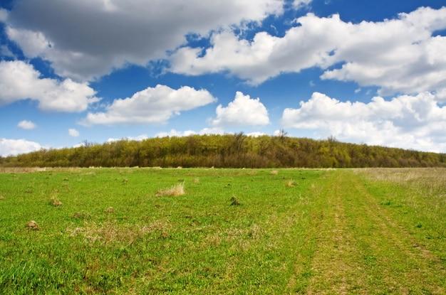 Lente op weide landschap