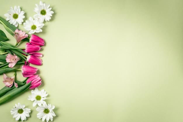 Lente paarse tulpen op een groene achtergrond.