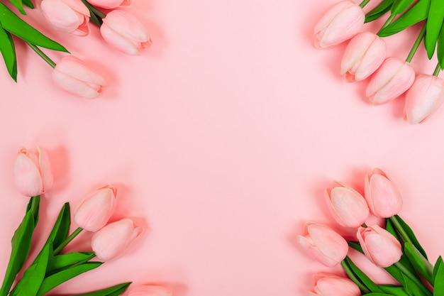 Lente roze tulpen, op een roze achtergrond