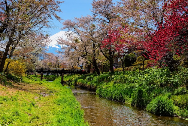 Lente sakura of kersenbloesem in oshino hakkai dorp met mt. fuji achtergrond