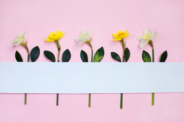 Lente samenstelling gemaakt met narcis bloemen
