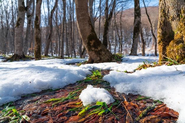 Lente stroom in het bos. sneeuw smelten