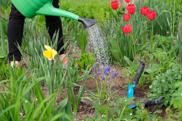 Lente tuinieren, bloemen kweken en water geven, lente