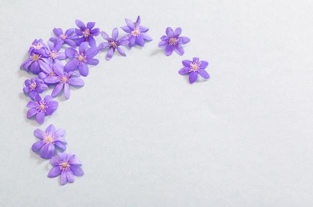 Lente violette bloemen op grijs