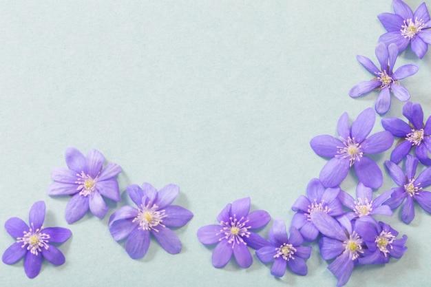 Lente violette bloemen op groen