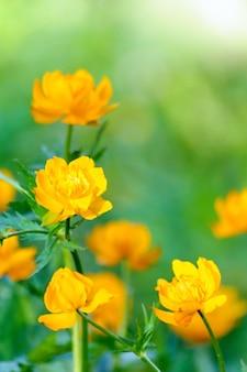 Lente wazig groen met mooie gele bloemen.