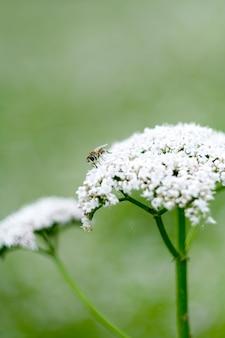 Lente witte bloem en bijen op groen