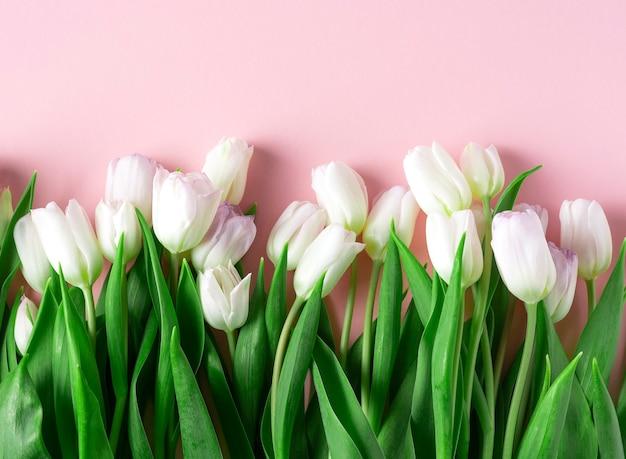 Lente witte tulpen liggen op een roze