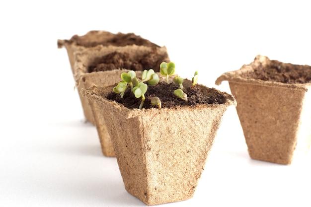 Lente zaailingen voor uw kleine tuin
