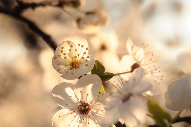 Lentebloemen bloeien aan een boom
