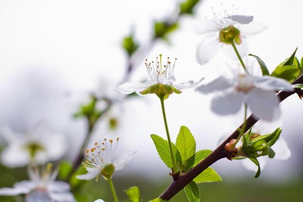 Lentebloemen in boomgaard