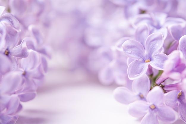 Lentebloemen met kopie ruimte. lila bloemen close-up op een witte muur
