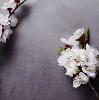 Lentebloemen met takken bloeiende abrikozen op grijs