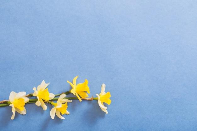 Lentebloemen op blauw papier achtergrond