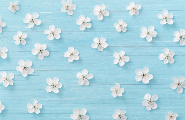 Lentebloemen op blauwe houten muur