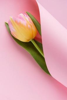 Lentetulp verpakt in roze papier