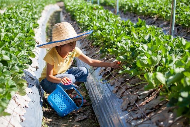 Leuk aziatisch kindmeisje die hoed dragen die verse aardbeien op organisch aardbeilandbouwbedrijf plukken