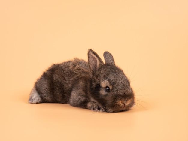 Leuk bruin konijntjeskonijn op gele achtergrond