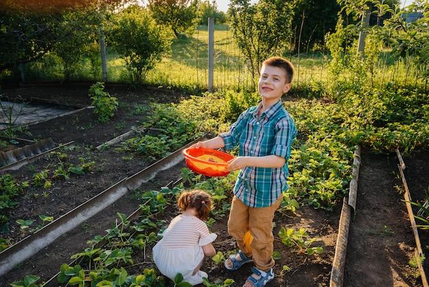 Leuk en gelukkig broertje en zusje verzamelen aardbeien