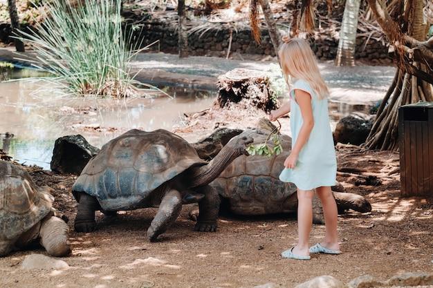 Leuk familie-entertainment op mauritius. een meisje voedt een reuzenschildpad in de dierentuin van mauritius