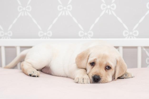 Leuk fawnpuppy op het bed en het hoofdkussen.