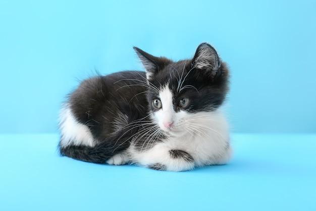 Leuk grappig katje op blauw Premium Foto