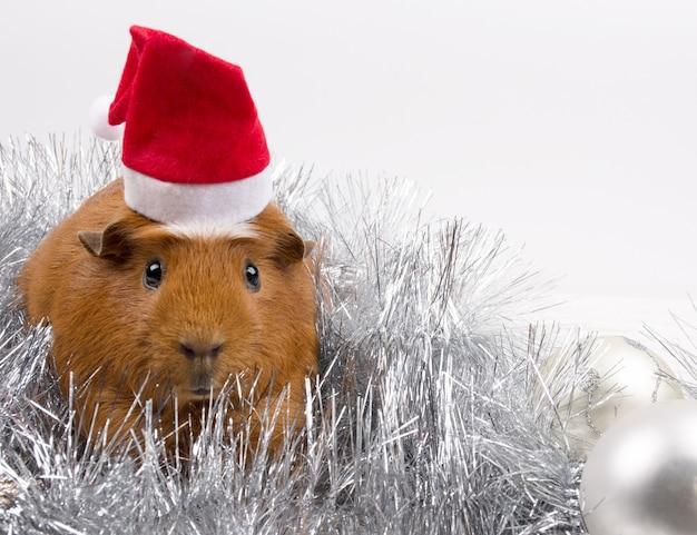 Leuk grappig proefkonijn dat een kerstmanhoed draagt onder kerstmisdecoratie